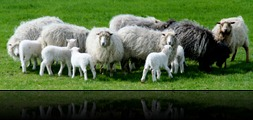 schapendrijven zomer 2010